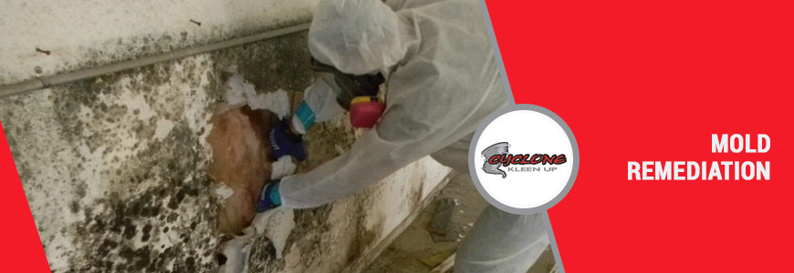 Mold Remediation in Colorado